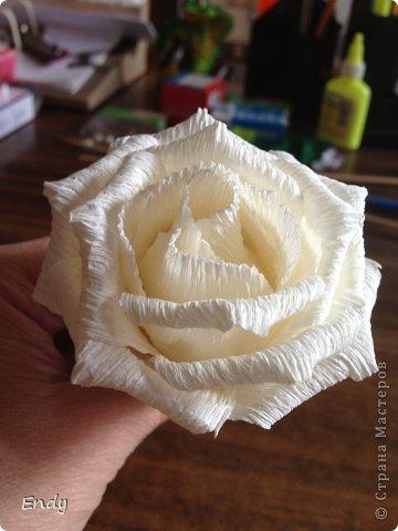 Роза из бумаги. Мастер-класс. (9 фото) - картинка