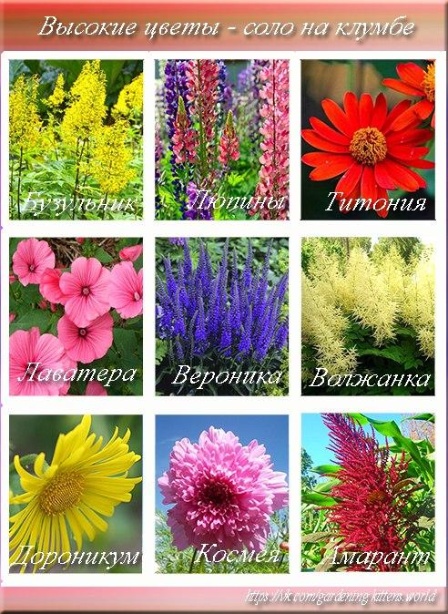 10 правил создания цветника
