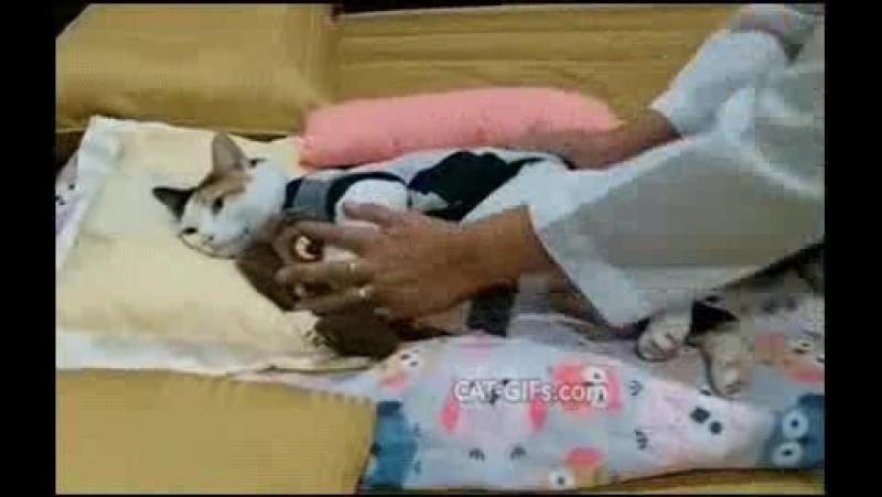 Crazy cat Lady strikes again! (Oh my gawd, so freakin u cute.)