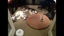 ПОПРОБУЙ НЕ ЗАСМЕЯТЬСЯ - Смешные Приколы и фейлы с Животными до слез, смешные коты 89
