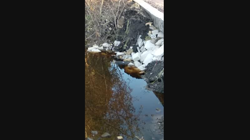 Как в Медном раскопали дорогу, утопили в воде трубу, закопали, и назвали это работой по понижению уровня воды.
