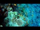 ДАЙВИНГ В ИОРДАНИИ🐠Снорклинг в Красном море🐙 Подводный мир в Акабе🐢