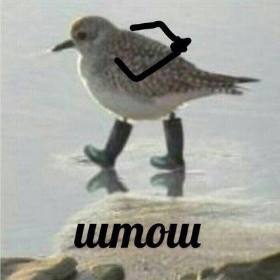 Il Il