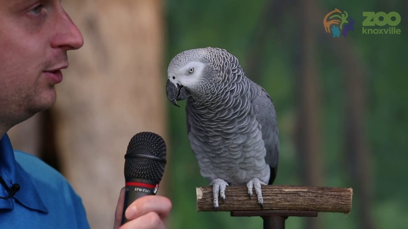 Einstein the African Grey Parrot showed off her vocabulary skills with a 200 sounds and words