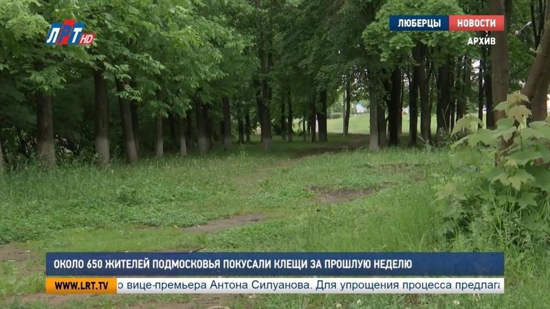 Около 650 жителей Подмосковья покусали клещи за прошлую неделю