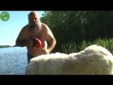 Сейчас я покажу вам, как помыть большую собаку...