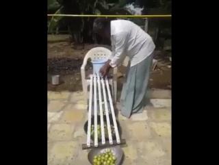 Сортировка лимонов