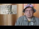 TV-Розовая блоха — Человек в первый раз увидел кота