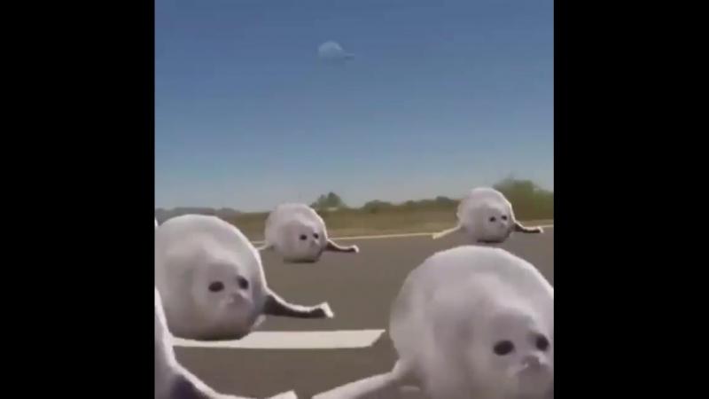 морские котики :3