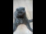 Мой котя Сеня.