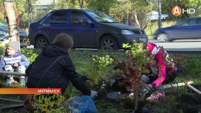 В столице Заполярья прошла традиционная акция «Зелёный рекорд»