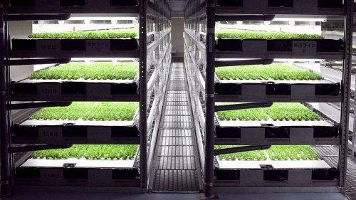 Первая в мире полностью роботизированная сельскохозяйственная ферма начнет функционировать в Японии в 2017 году