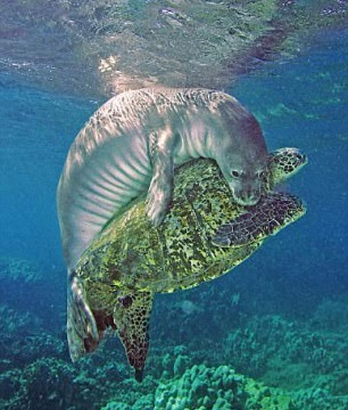 Эта черепаха зaплыла на мeлководье и зaпуталась в...
