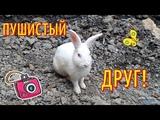 Кролик, который гуляет сам по себе в КОСТА РИКЕ Забавный белый кролик КОСТА-РИКА