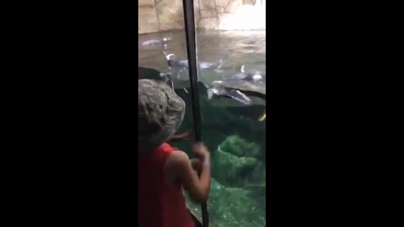Penguin Plays With Kid at Zoo - 995371