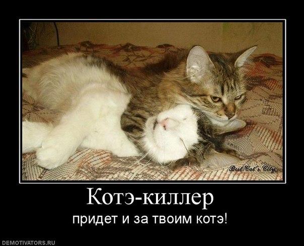 прикольные картинки с котэ: