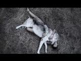Werewolf - Cat Power