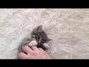 Милые котики котятки😍❤ Маленькие крохи