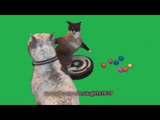 Кот и пес и робот-пылесос (продолжение)