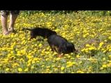 Kaligo Atrey Gauri 3,5 мес