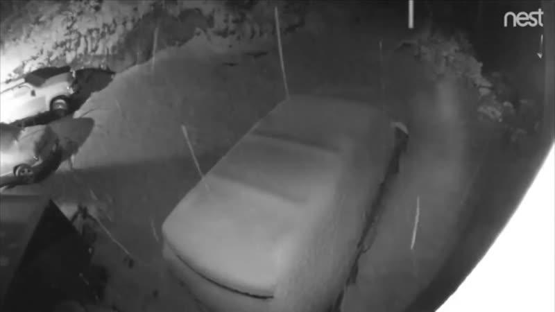 Mischievous bear opens three car doors then makes getaway in Colorado snowstorm