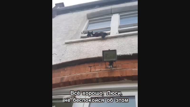 Бешенный кот 😂