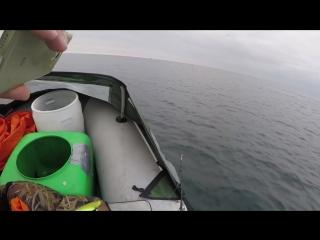 Северные дельфины у берегов Териберки
