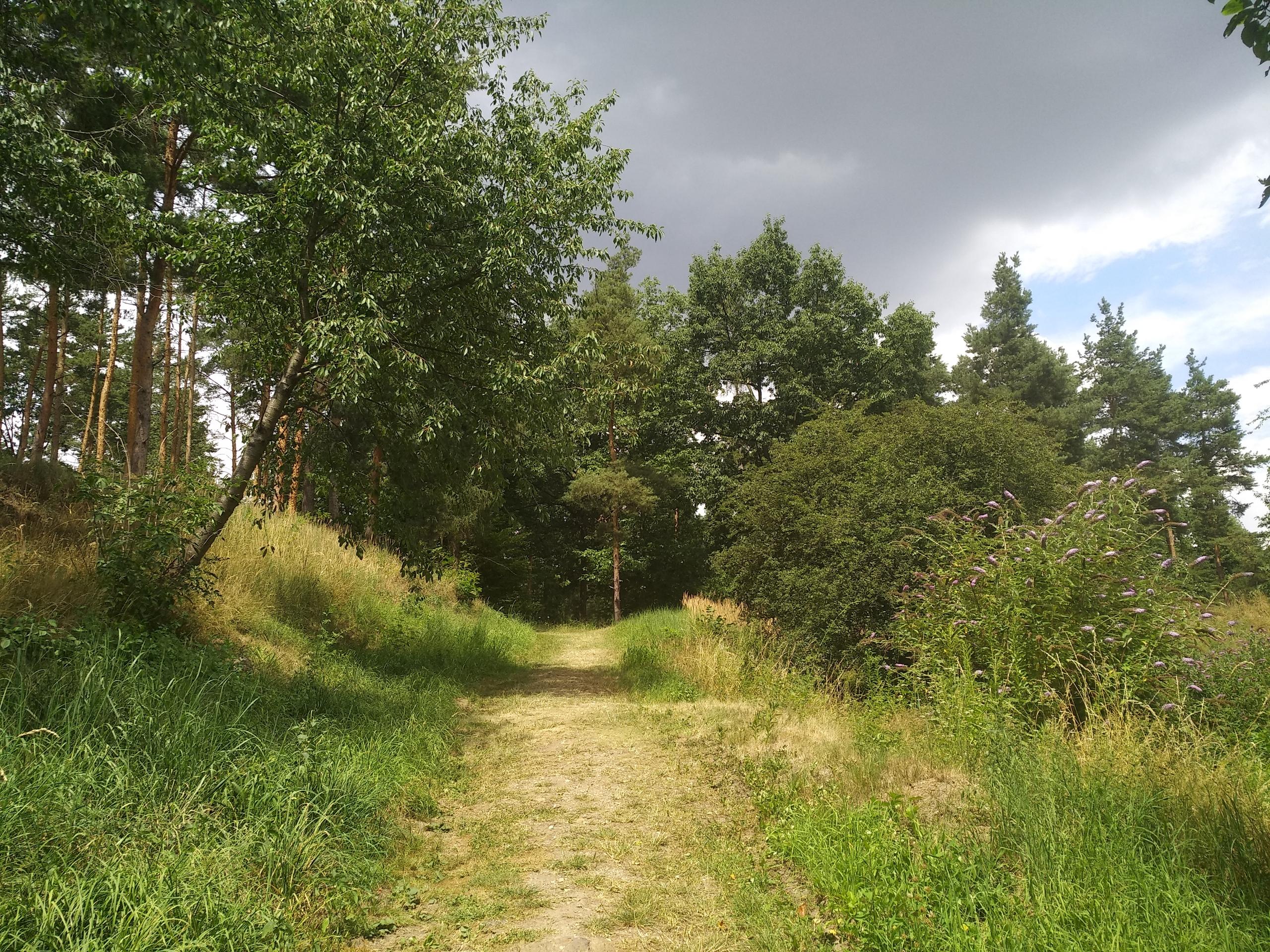 Ароматы и цвета ботанического сада в Праге
