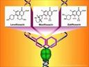 Фторхинолоны - Механизмы действия и резистентности
