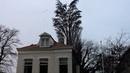 Regardez bien cet arbre Ce que cet homme a réussi à filmer est tout simplement incroyable