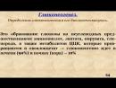 Лекции по биохимии доцента Трунилиной Н.И. Обмен углеводов. Лекция № 2.