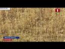Жаркая и сухая погода в Беларуси доставила немало хлопот аграриям. Панорама