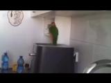 Крутые попугайки