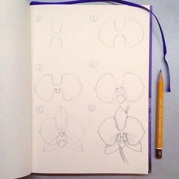 Рисуем орхидею цветными карандашами. (10 фото) - картинка