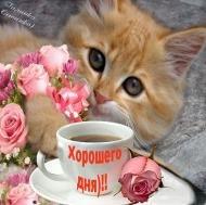 С добрым утром.Хорошего дня  Кофе в чашке стынет Умывается пушистый рыжий кот. За окном на небе ярко синем Начинает солнце свой обход.  Утро доброе. И день пусть будет славным, Добрым и хорошим для тебя, Чтобы лишь от радости и счастья У тебя кружилась голова. Счастья,любви,хорошего настро