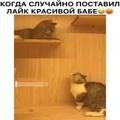 """Мимимишные Животные 🐱 🐅 🐶 🎣 on Instagram: """"Не все же так категорично!!!"""""""