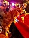 Это кот из Нового Орлеана, зовут его Mr Wu и он ежедневно посещает бар.