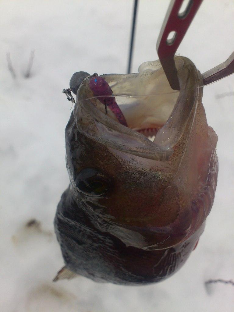 Изображение 1 : Зимний микроджиг. Активный праздник с пассивными приманками.