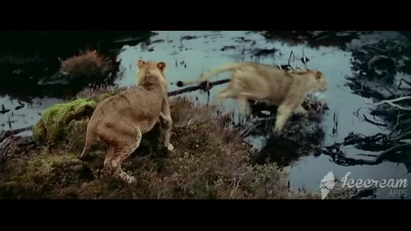 Борьба за огонь - Столкновение с саблезубыми тиграми