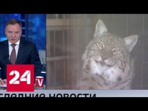 Проект закона, запрещающий содержать дома диких животных, внесен в Госдуму - Россия 24