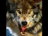 Гера Грач - Волк