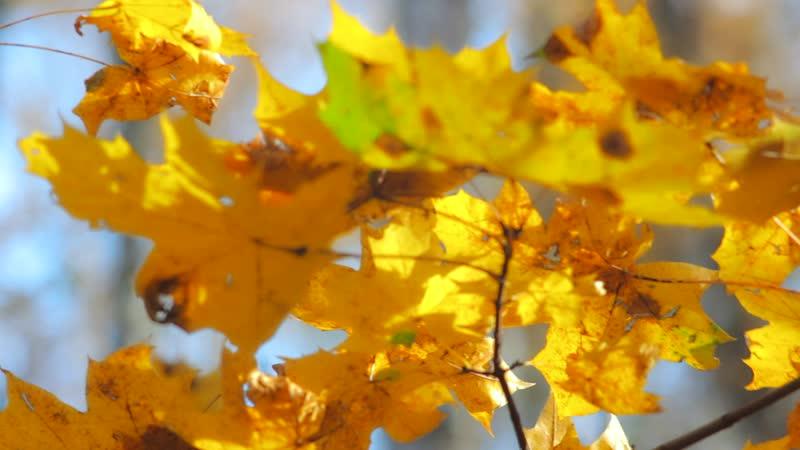 Рыжая осень - Славич Мороз ( песни для души! )