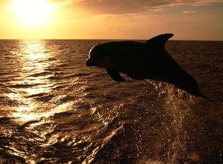 Дельфины - очень красивые и умные.  И кто только не мечтает с ними поплавать, правда.  Давайте понаблюдаем за ними!