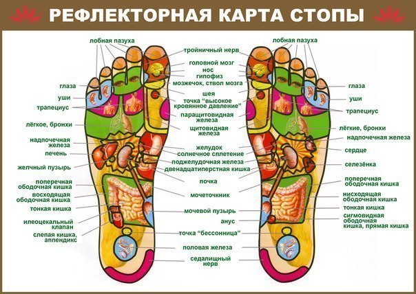 МАССАЖ СТОП Детям массаж стоп вполне могут делать родители. Для этого не нужно специального образования, а потребуется лишь внимательность и предельная аккуратность. Нельзя забывать о том, что кости младенца еще довольно гибкие, а мышцы, особенно мышцы ног, недостаточно окрепли. Поэтому воздействие на стопу малыша должно быть очень бережным. Стоит ли рассчитывать на массаж стоп как на профилактику ортопедических проблем, связанных с формированием ступни? Конечно же, можно, но только в…