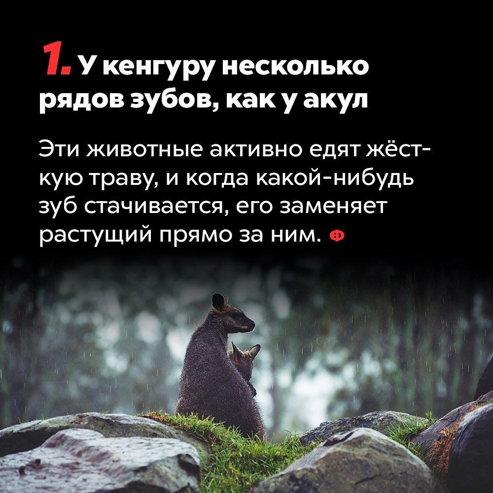 https://pp.userapi.com/c849336/v849336377/1d56ea/-0dRLUNC9A0.jpg