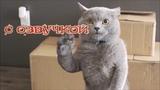 Приколы с котами с ОЗВУЧКОЙ – Смешные коты и кошки 2018 – кот Мурзик и ржака ДО СЛЕЗ