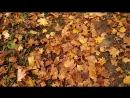 Осенний ковер покрыл землю