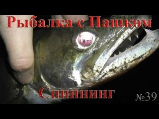Рыбалка с Пашком Спиннинг Нижняя Москва река