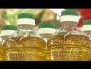 Рафинированное масло - вред или польза Контрольная закупка...