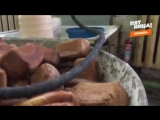 Шок! Как на самом деле готовят хлеб! Инсайдеры. Ярославль. Пятница
